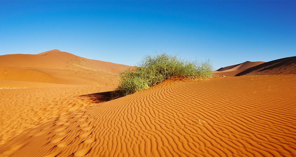 photo-desert